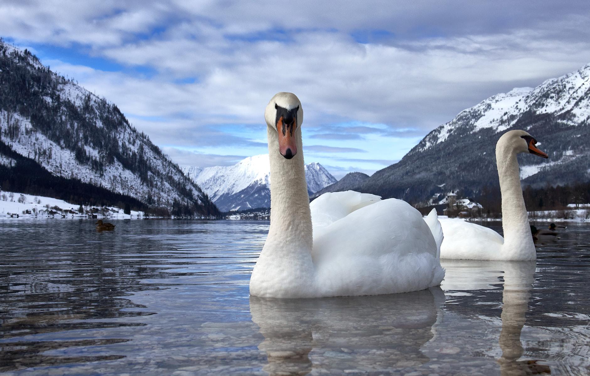 FOTO & GRAFIK Joachim Haschek / Natur-Fotografie